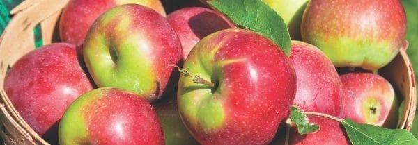 Country Candle Macintosh Apple świeca zapachowa (652g)