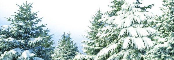 Kringle Candle - Snow Capped Fraser - Świeczka zapachowa (35g)